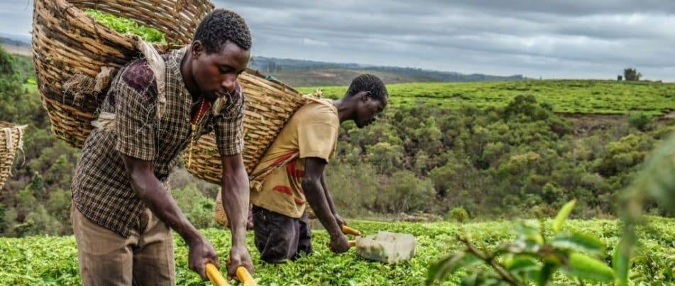 The Mission: Tanzania