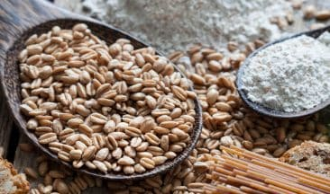 What does Magnesium do for the human body?