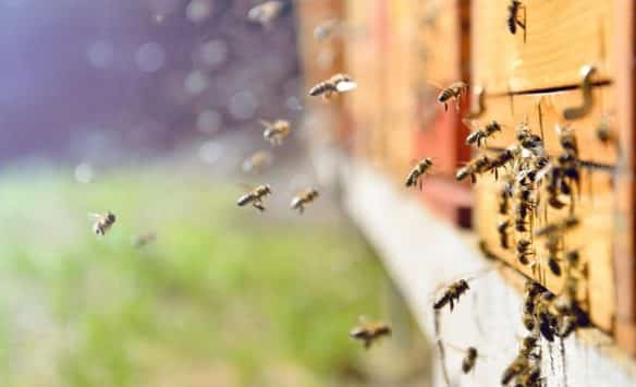 Sustainable Beesiness – ICL's Model for a World on the Back of a Bee
